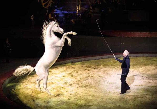 Alexis_Gruss_Equestriades_Orange_Théâtre_Antique_cheval