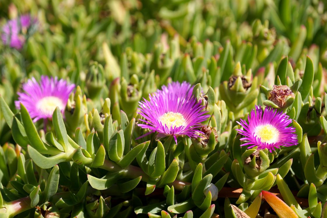 Hema_pose_ses_valises_Marseille_Iles_Frioul_flore_plantes_fleurs