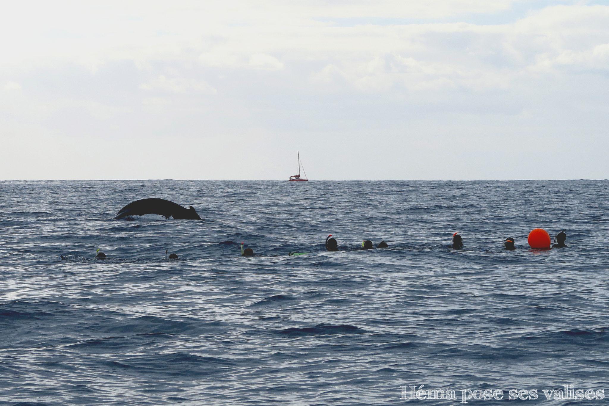Nager avec les baleines en pleine océan à La Réunion