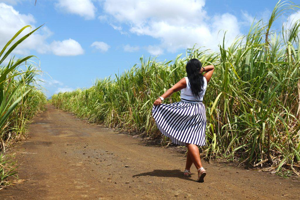 Balade dans les champs de canne à sucre à l'Ile Maurice