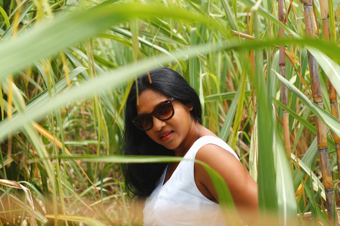 Découverte des champs de canne à sucre à l'Ile Maurice