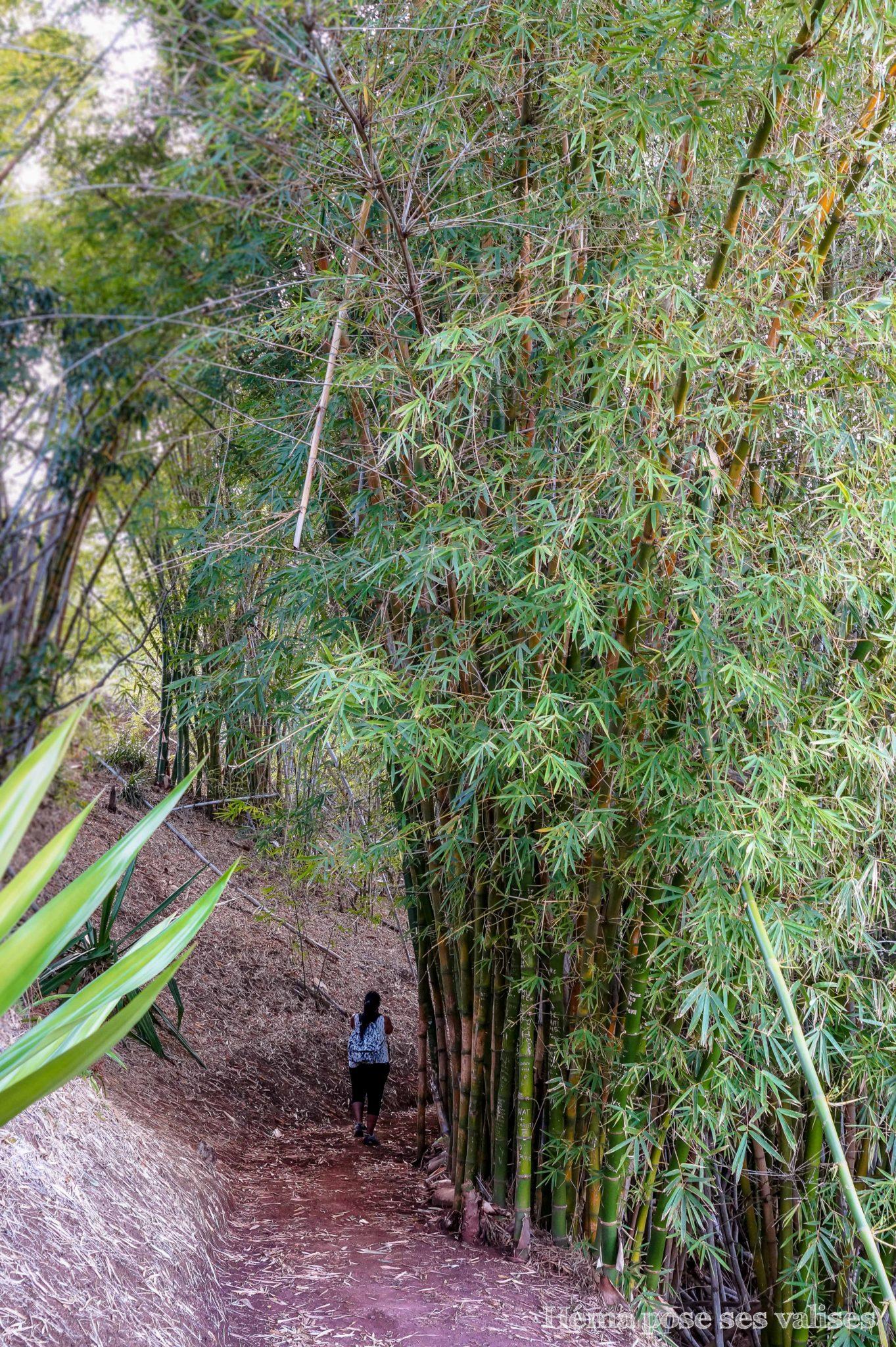 Bambous sur le sentier de la randonnée de Coteau Sec dans la région de Dimitile