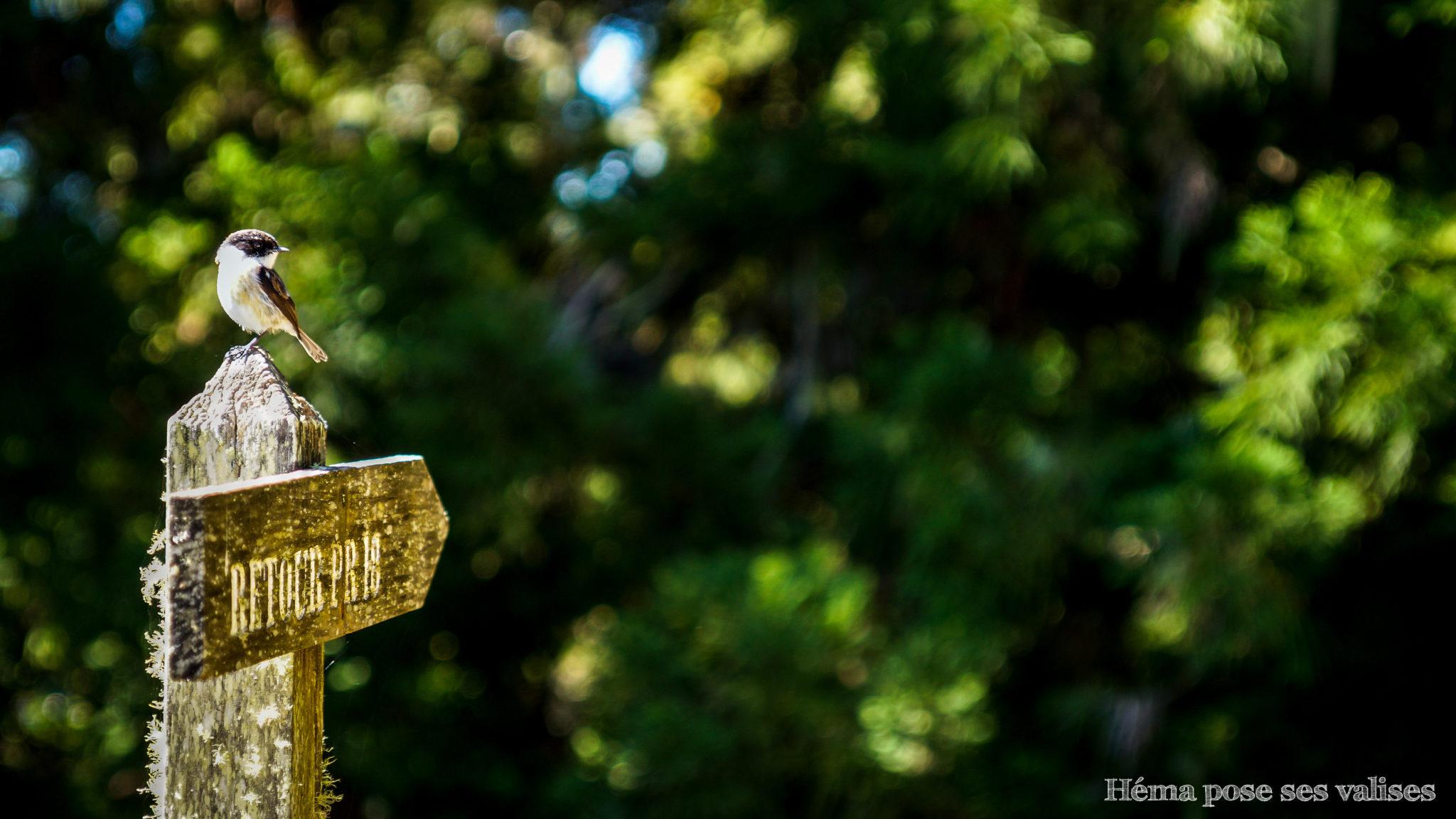 Oiseau sur la randonnée Piton Cabris