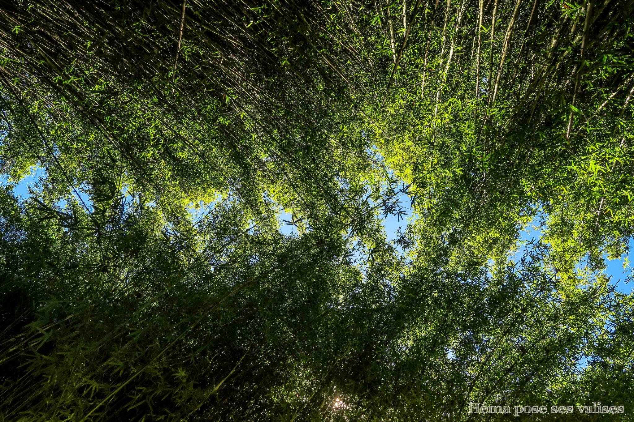 Sous l'allée des bambous sur le sentier de randonnée des 3 cascades à La Réunion