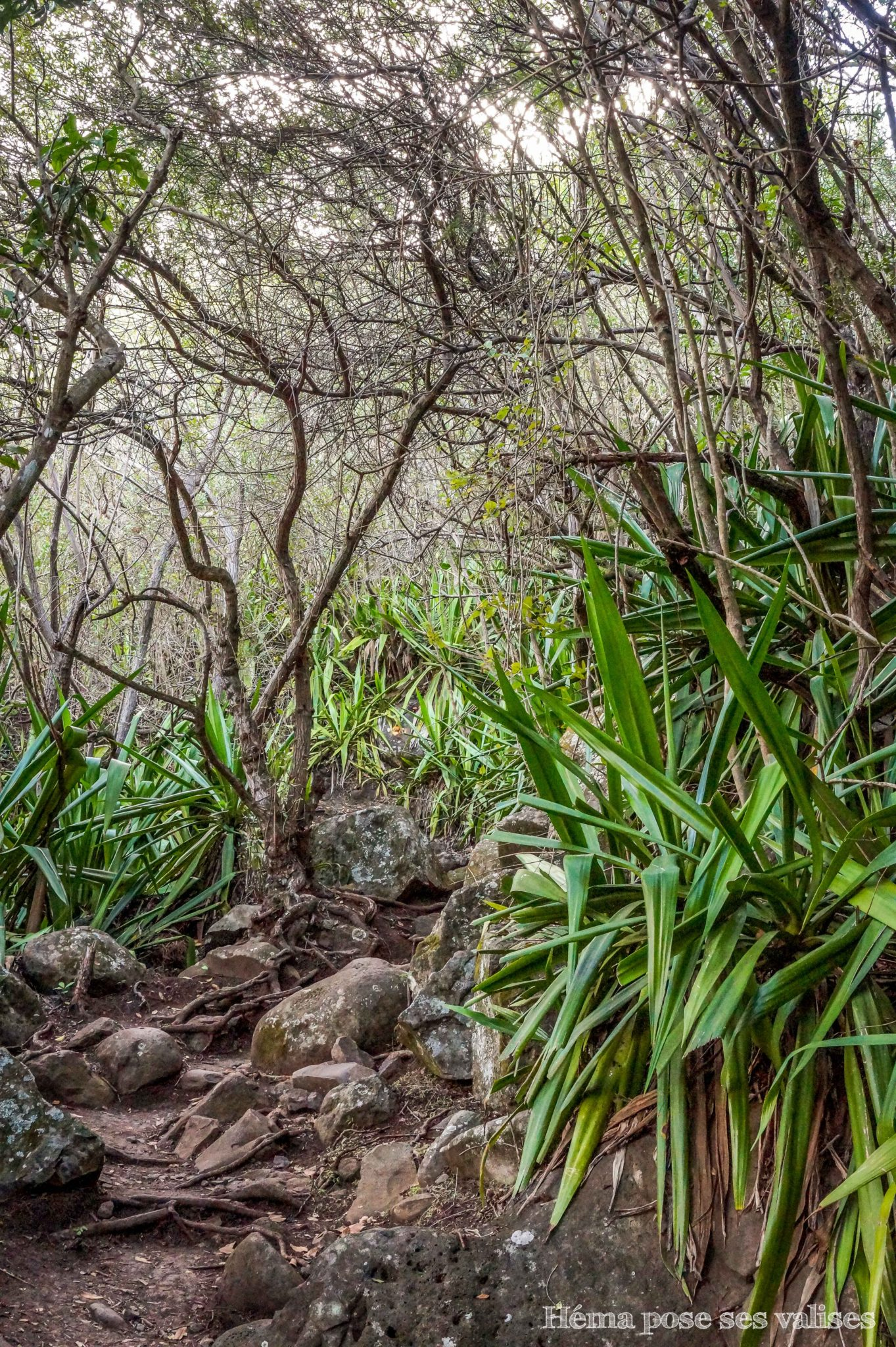Faune rencontrée sur le sentier de Coteau Sec à La Réunion