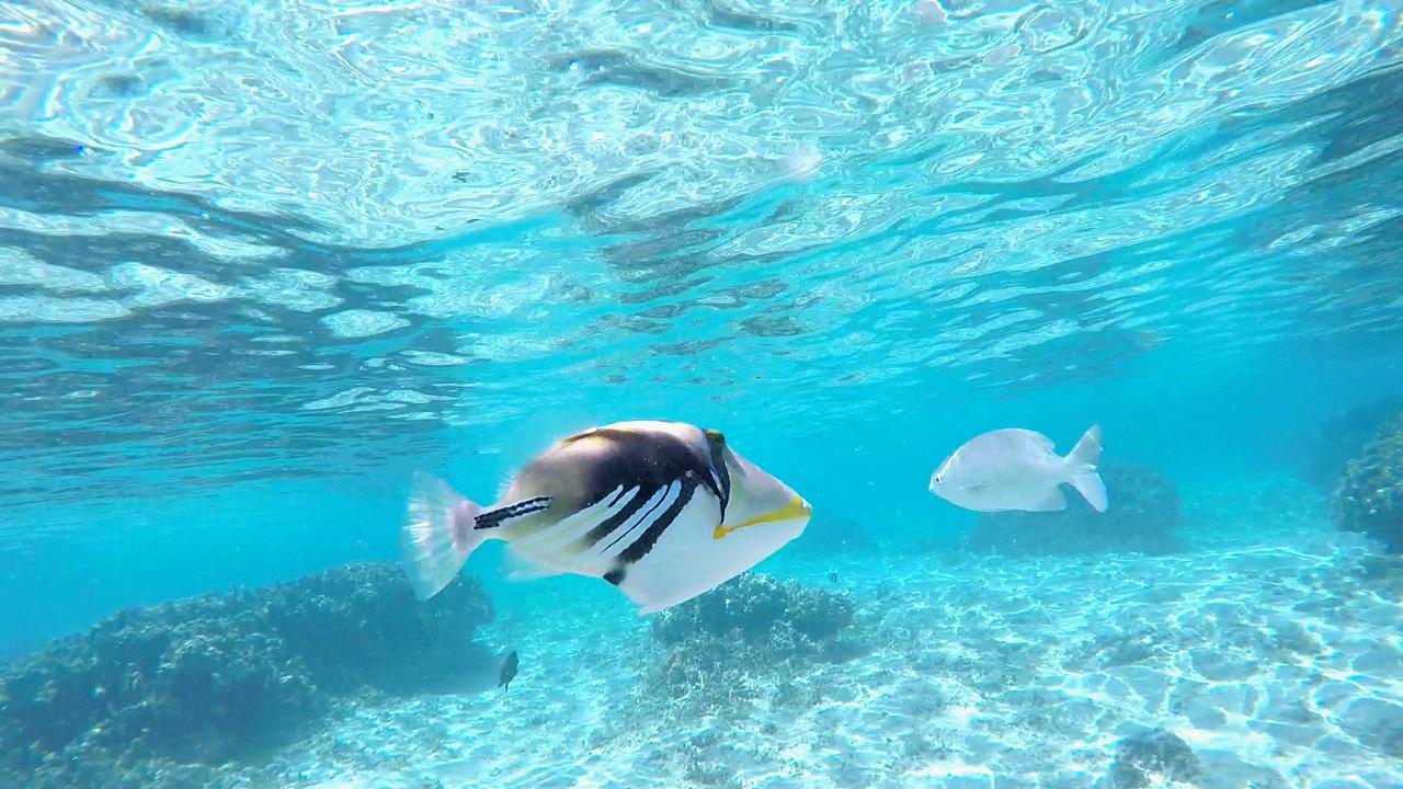 Poissons lors d'un snorkeling à l'Ermitage-les-Bains