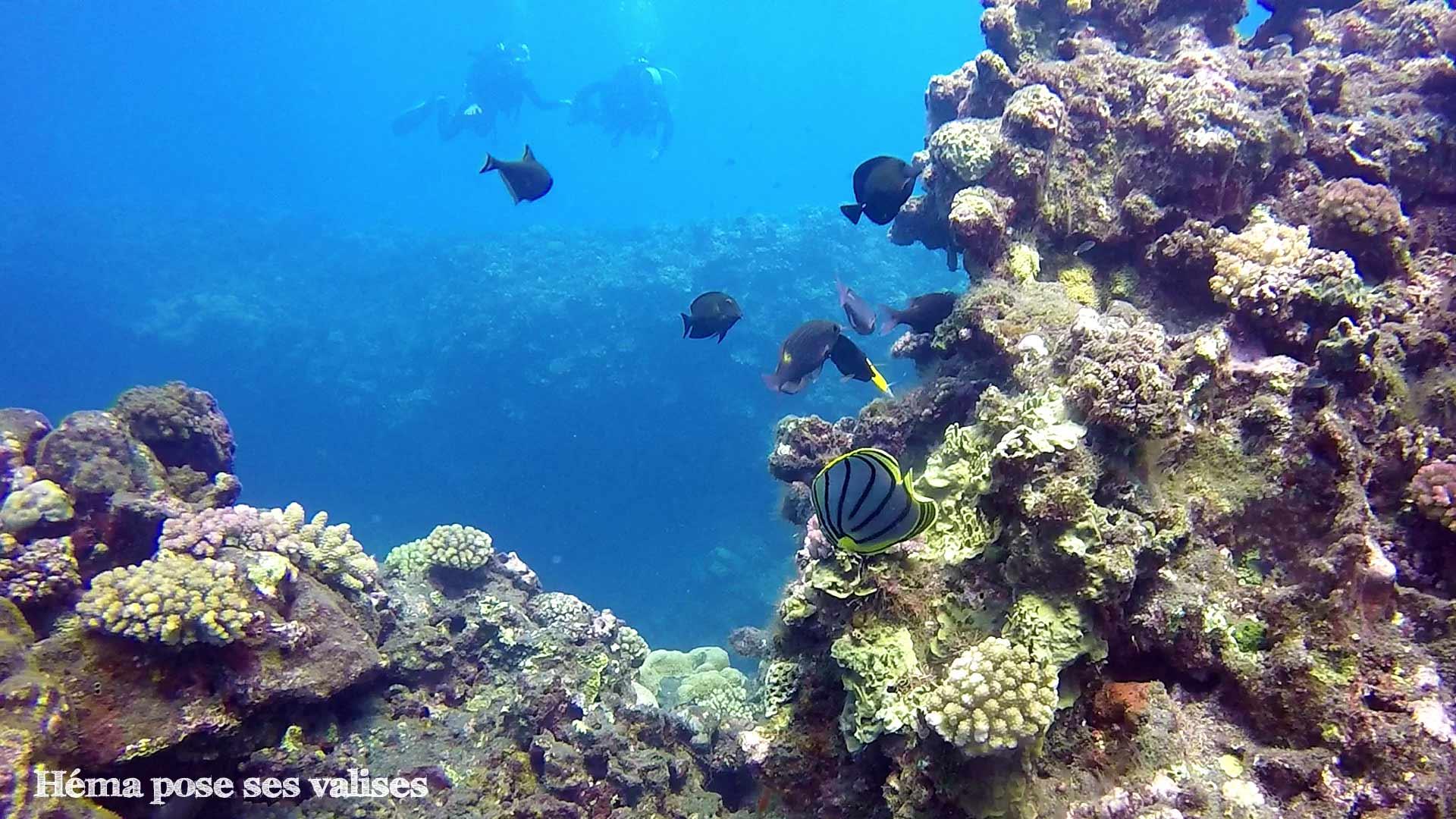 Découverte de la faune et flore sous-marine en plongée à La Réunion