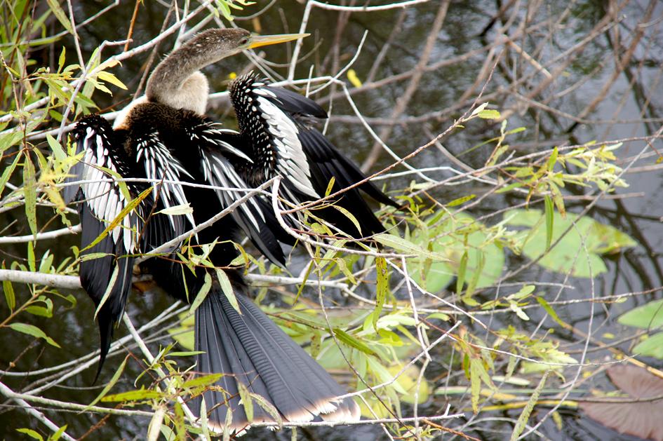 Floride : les Everglades