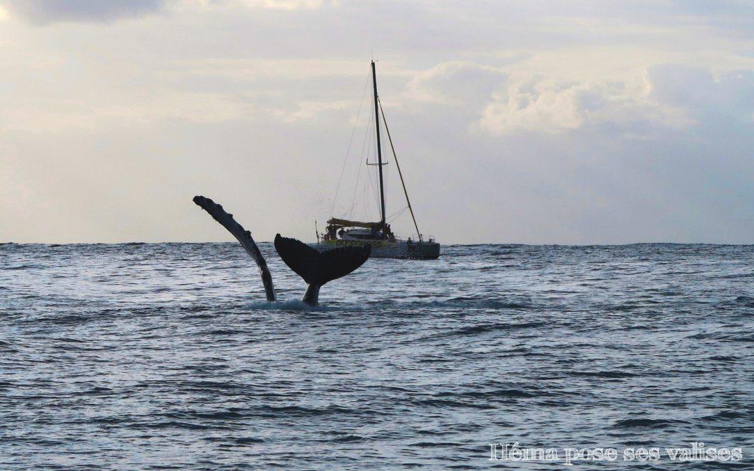 Nager avec les baleines sauvages à La Réunion